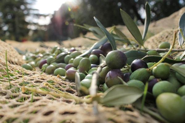 Оливковое масло для Вашей красоты
